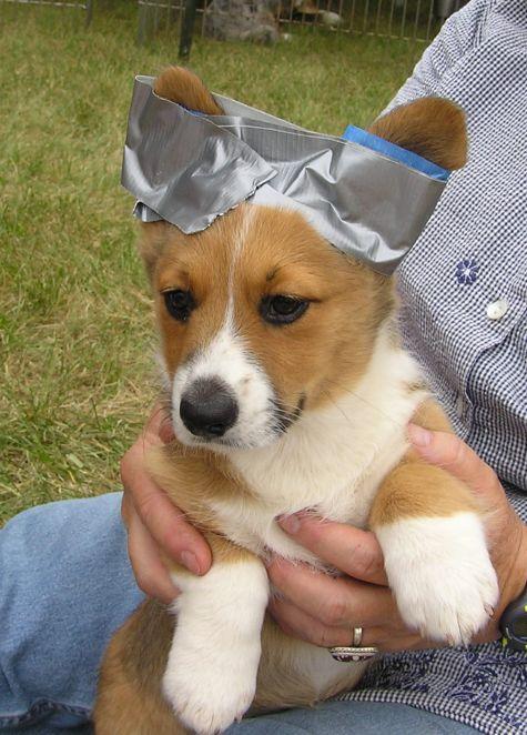 Taping Natural Dog Ears